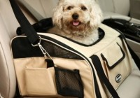 Best Car Travel Accessories for Dogs 2015